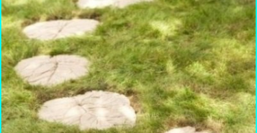 Niski rosnące kwiaty ogrodowe: wybór najlepszych odmian dla kwietników