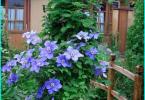 Jak wybrać niszczarkę ogród - który z nich jest lepszy i dlaczego?